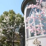 春は週替わりで木々に花が咲き誇る。
