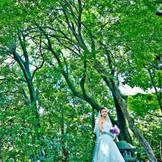 700坪の敷地の中はどこを見ても緑が美しい常緑樹が。