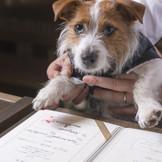 """大切な家族の一員""""ペット""""が結婚証明書にサインをする想い出に残るオリジナル演出"""