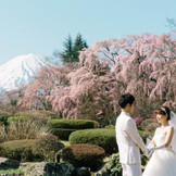 3万坪の庭園から望む富士と樹齢80年を超えるしだれ桜