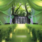 陽光の差し込む、清々しい森林の中での結婚式をイメージ♪『森~フォレスト~』