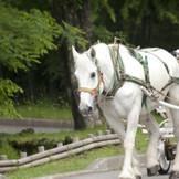 白馬「かげまる」君☆やさしい目をしているお馬さんだよ♪