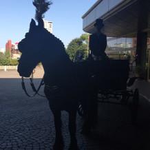 埼玉から来てる馬