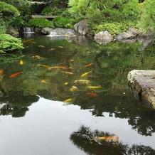 池には鯉が!