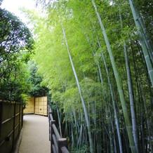 奥には立派な竹林があります