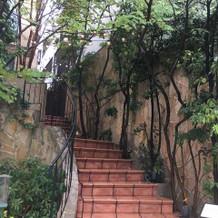階段上がる途中の緑が可愛いです