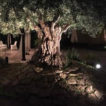 オリーブの木もムーディーです。