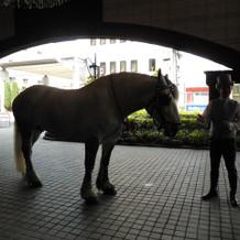 可愛い白馬