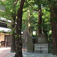神社内の緑
