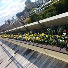 綺麗に花が植えられています