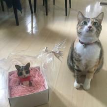 愛猫とのツーショットで。
