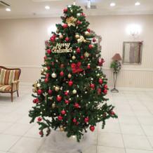 クリスマスツリー出現!