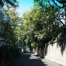 神社まわりも緑が多いです。