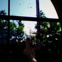 天使も祝福してくれるウィングシャワー