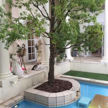 ガーデンのプールはリゾート感があり◎