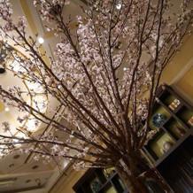 桜の木を会場装花として使用した