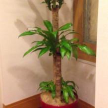 ロビーの観葉植物