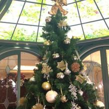 クリスマスシーズンはツリーも演出の一つ