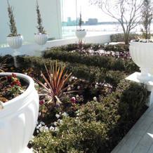 ガーデンには緑やお花も植えられている