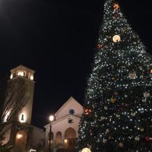 冬婚限定のクリスマスツリー
