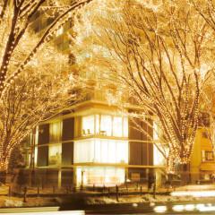 仙台の冬の風物詩。「光のページェント」。光輝く幻想的な世界を独占できるのは、定禅寺通りに面した会場だけの特権。