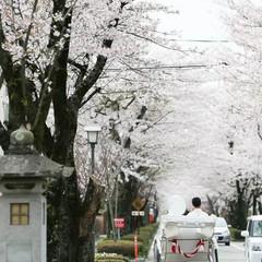 乃木神社挙式限定'(4月)