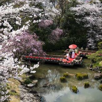 厳かな挙式のはじまりは、池に浮かぶ参道を歩く「参進の儀」