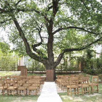 吹き抜ける風、ざわめく木々に囲まれた、森の日だまりウェディング。写真は桜の木。