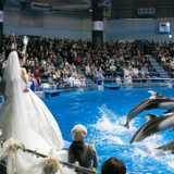 2,000名が祝福♪水族館のイルカショーで愛を誓った演出いっぱいのウェディング!