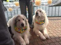 愛犬家に朗報!!結婚式も愛犬と一緒に挙げたい!を叶える場所は那須にあった!
