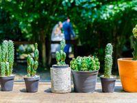 海外でも注目度上昇中!「鉢植えの植物」で飾るウェディングの魅力と取り入れ方♪
