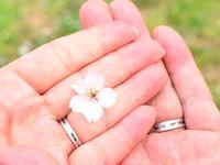 春といえば!披露宴に取り入れたい<桜モチーフ>の結婚式アイデア♪