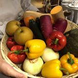 当日朝採れたての野菜