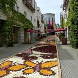 ちょうど花の絨毯の季節でした