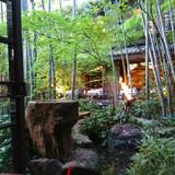 中庭に竹林があり、とても趣があります。