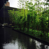 中庭の竹も非常に素敵でした。