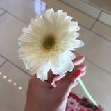 バンドルをした時のガーベラの花