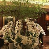 館内のお花は季節ごとに変わります。