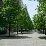式場前の並木道