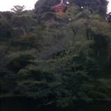 庭にある三重塔
