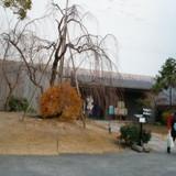 正面に桜の木があり人前式はこの前で。