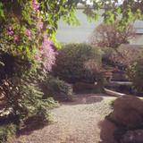 控え室から小さな庭園が望めます
