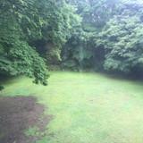 雨の日に2階から見たお庭