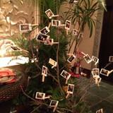 ウェルカムツリー