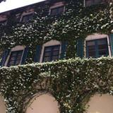 中庭からの窓