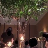 テーブルに木が生えている…!