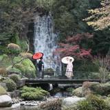 日本庭園に迫力有る滝