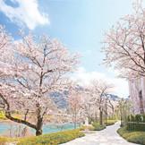 【春のサクラヒルズ】  敷地内に300本以上ある桜が咲き誇る  3月上旬頃咲く早咲きの河津桜や寒緋桜から始まり、ソメイヨシノや枝垂れ桜、4月下旬に咲く遅咲きの八重桜まで、長く桜が楽しめます