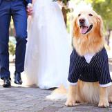 大分県で唯一館内全ての空間でペットと一緒の結婚式が叶います。 わんちゃんはもちろん、どんなペットも受け入れ可能のKIJOKAKKUで大切な家族との一日を楽しんで