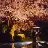 ライトアップされた桜の下で…最高の一枚。